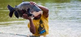 Tailândia se interessou por peixe criado em Mato Grosso