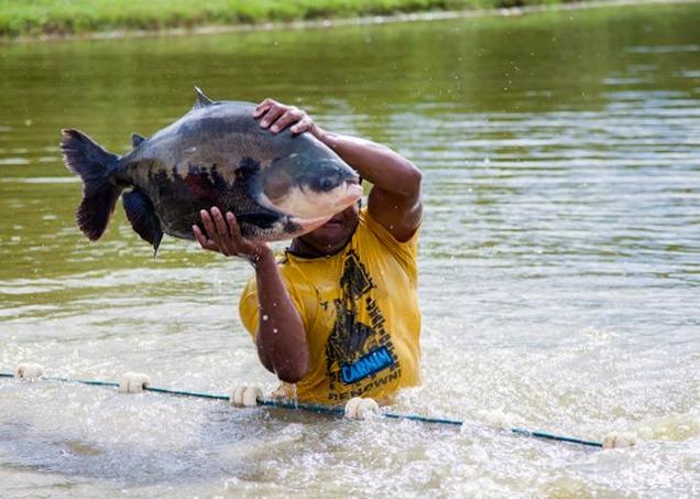 tailandia-se-interessou-por-peixe-criado-em-mato-grosso